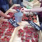#strawberry, moppie?